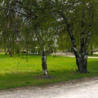 Beaver Dick Park Trees