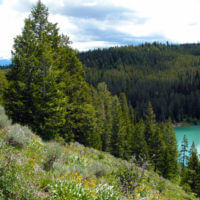 View of Packsaddle Lake and Trees