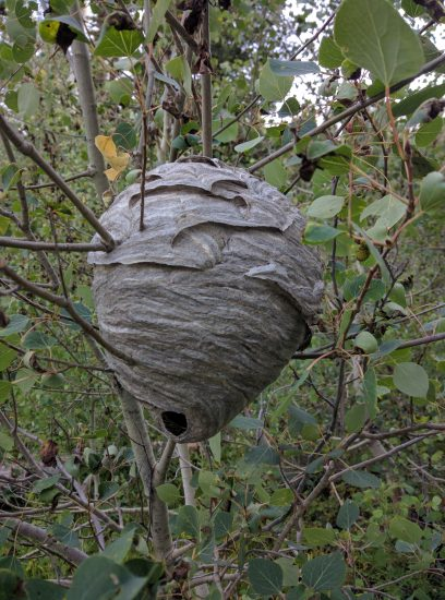 Moody Meadow Wasp Nest