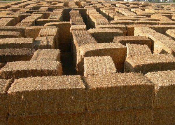straw-maze