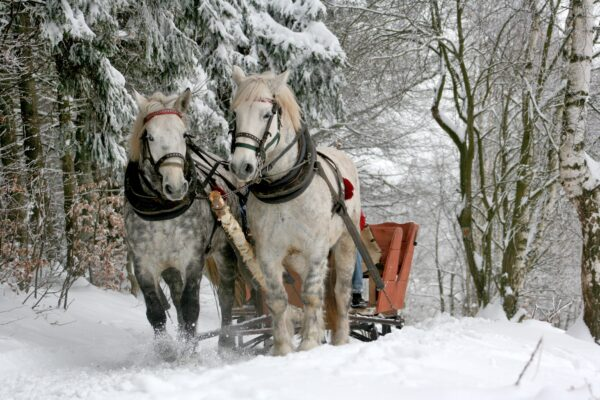 sleigh-ride-horses-the-horse-winter